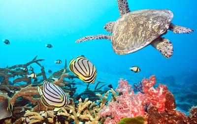 Virgin Islands snorkeling